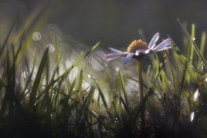 Tess Whitehurst-4 Unique Little Ways to Celebrate Beltane