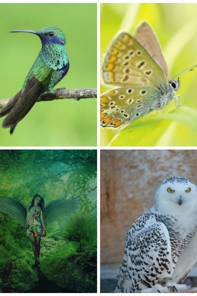Winged Messenger Oracle: Which Image Calls to You the Most?