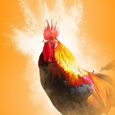8 Ways to Make the Most of the Year of the Yin Fire Rooster
