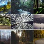The Magical and Metaphysical Properties of Trees
