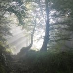 8 Awesome Ways to Heal and Work Magic with Trees